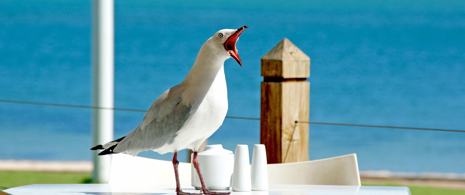 seagull pest services