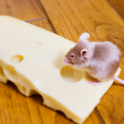 Rodent control food industry